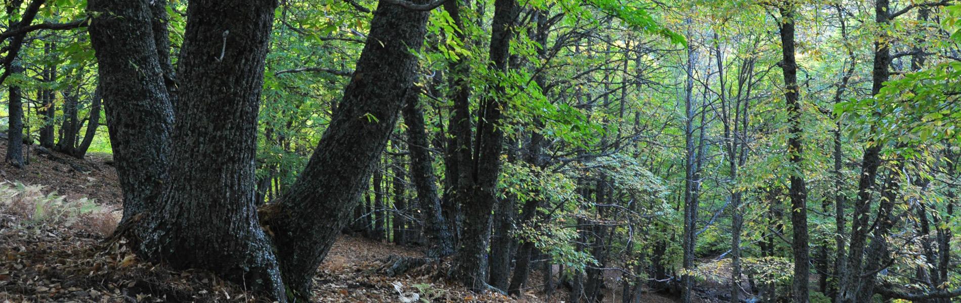 Profoas - Asociación de Propietarios Forestales de Asturias