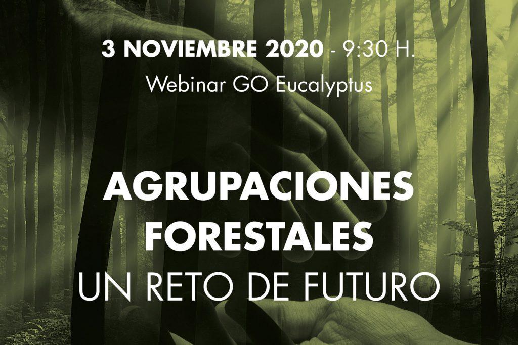 Agrupaciones Forestales, un reto de futuro