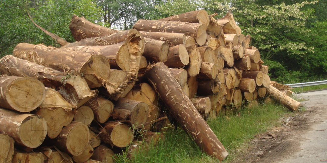 El sector forestal, segundo motor económico de Asturias